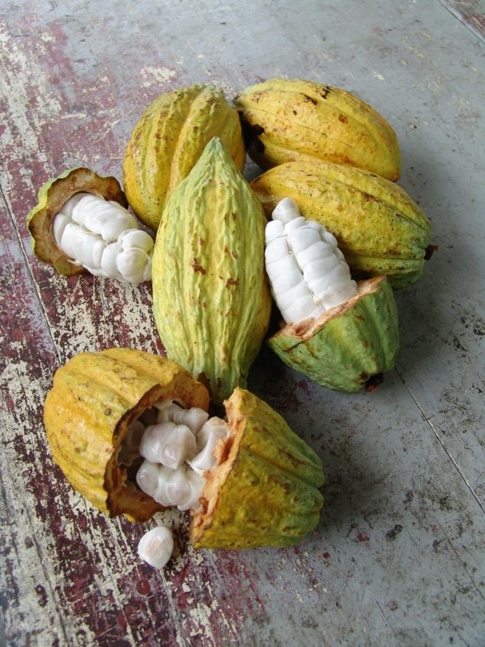 sonnenschutz haut kakaofrüchte kerne kakaobutter
