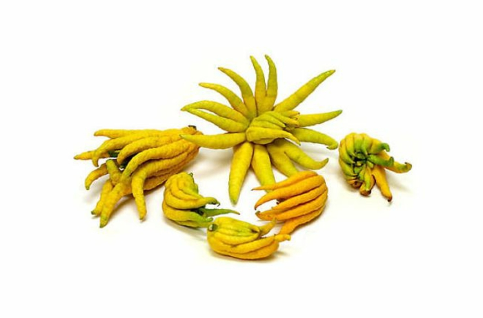 exotische  früchte chinesicher taro gelb