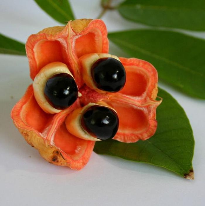 tropische früchte guarana energie frucht