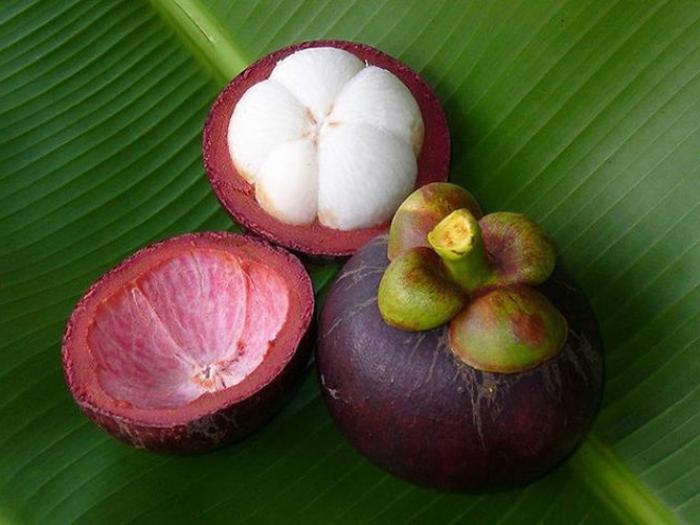 tropische früchte mangostin schale frucht