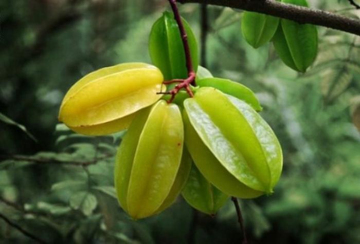 tropische früchte sternfrucht karambola