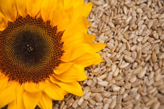 vegane schokolade rezepte produkte sonnenblumenkerne