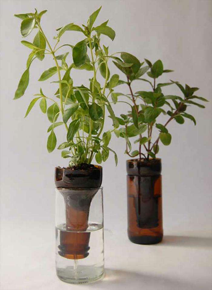 DIY ideen mit glasflaschen bastelideen pflanzentopf für jungpflanzen