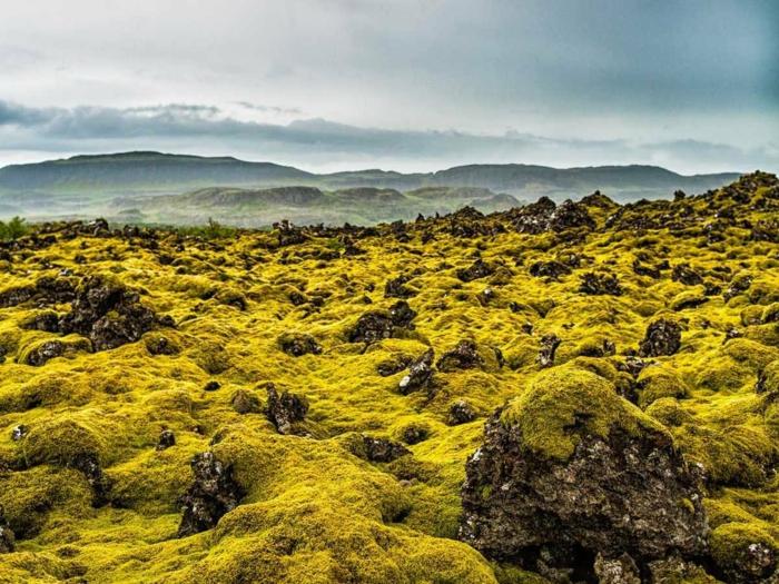 Feen und Elfen auf Island moos