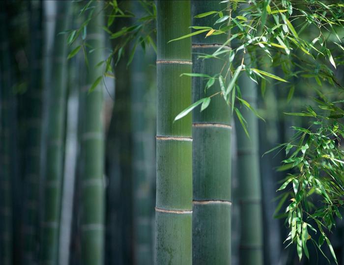 Feng Shui Garten vier bambus