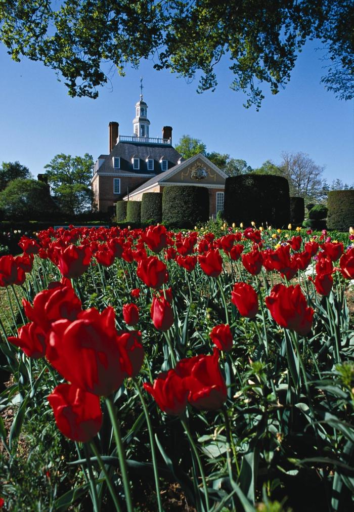Garten und Landschaftsbau ansichts tulpen