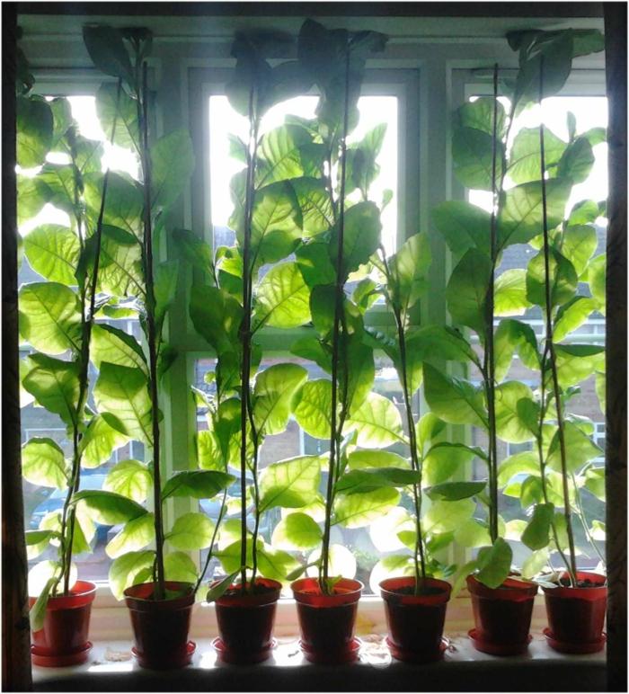 Fenster Gardinen Muster : Sichtschutz für Fenster weisse gardinen mit muster pflanzen