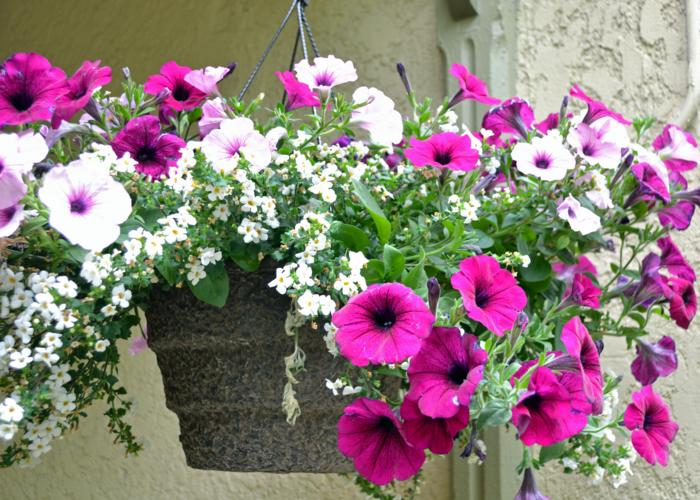 balkon dekorieren schöne petunien cooler blumentopf