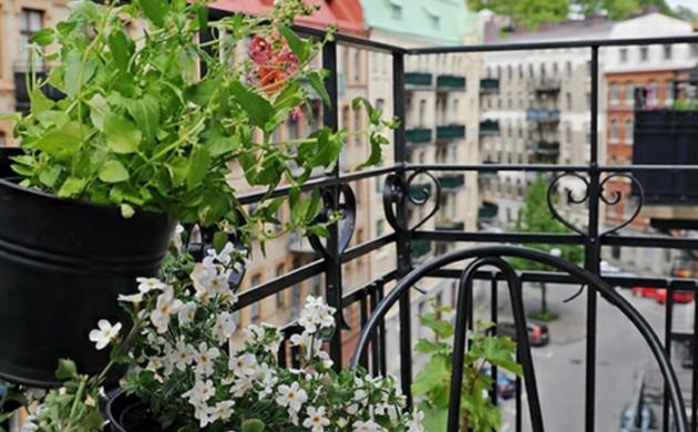 balkonpflanzen garten pflanzen zimmerpflanzen blumenkasten wasserpflanzen freshideen 1. Black Bedroom Furniture Sets. Home Design Ideas