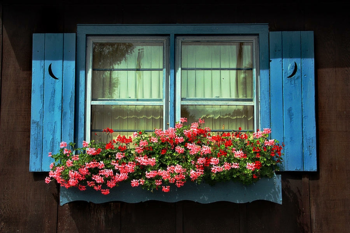 fensterdeko geranien blauer fensterrahmen rustikal