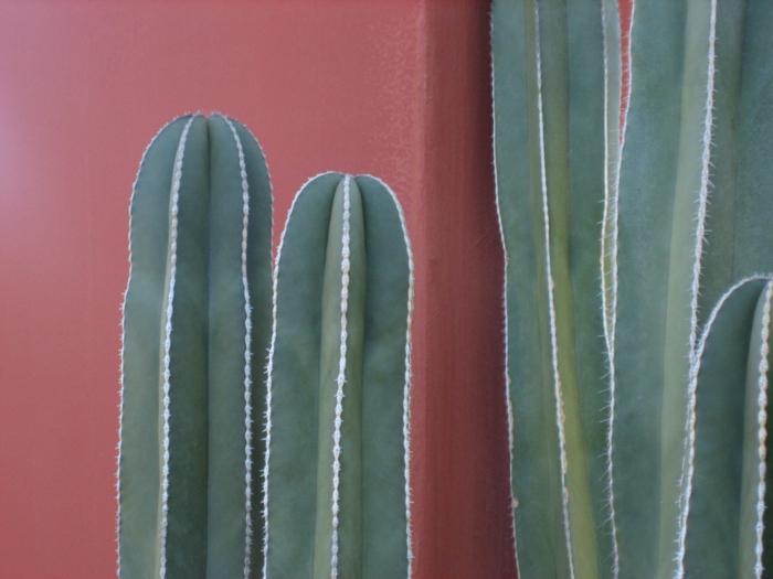 garten sichtschutz mexico restaurant kaktus nah