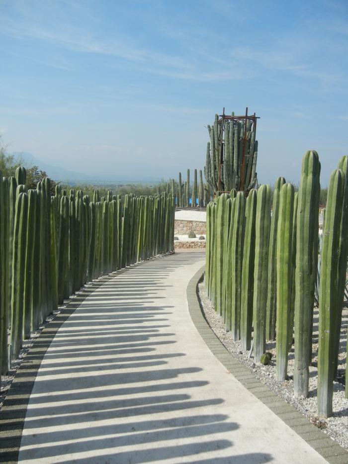 garten sichtschutz mexico restaurant natur schutz