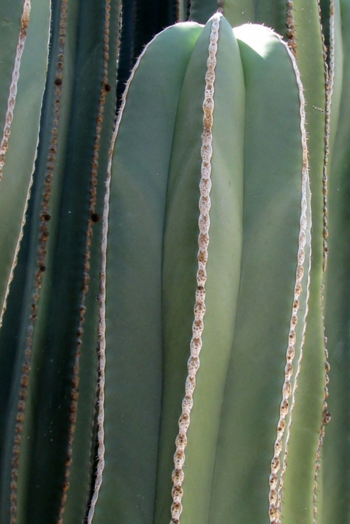 Garten Sichtschutz Mexico