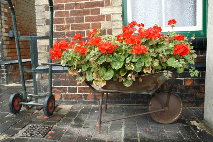gartenpflanzen rote pelargonien ausgefallene pflanenbehälter
