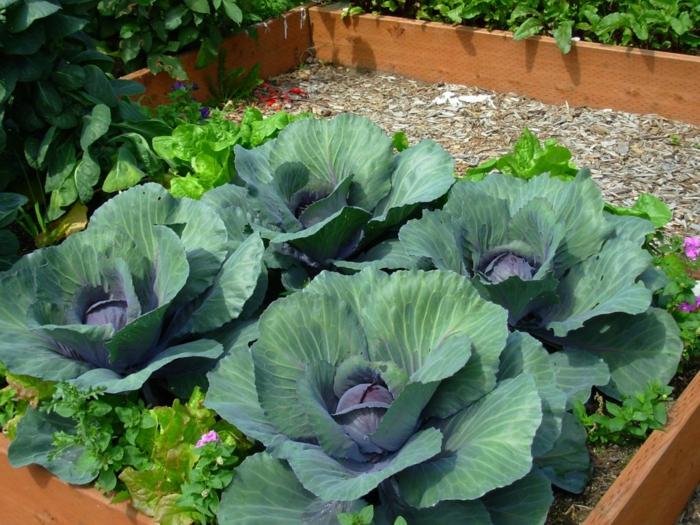 winterharte pflanzen - den garten das ganze jahr lang schön halten,