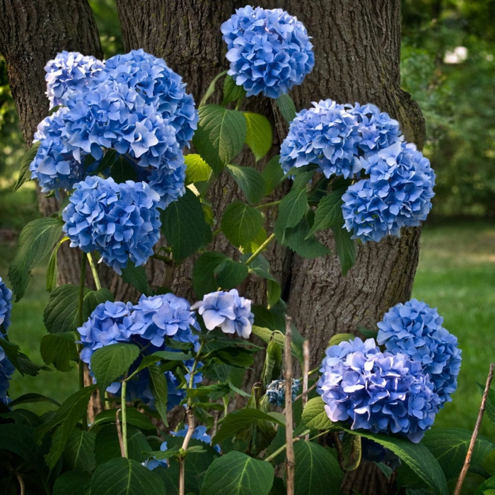 gartenpflanzen pelargonien blau garten pflanzen dekoideen