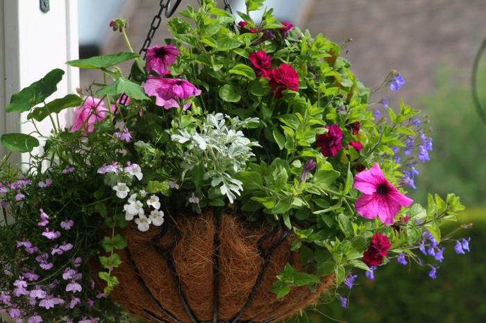 hängepflanzen balkon außenbereich dekorieren pflanzen