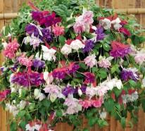 Hängepflanzen für Balkon – Welche Pflanzen sind auf den Balkon zu hängen