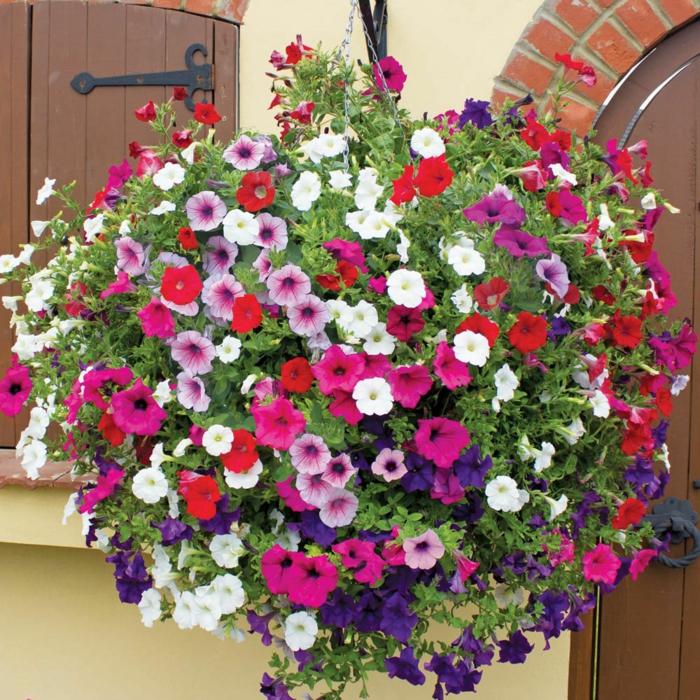 hängepflanzen balkon petunien farbig frisch
