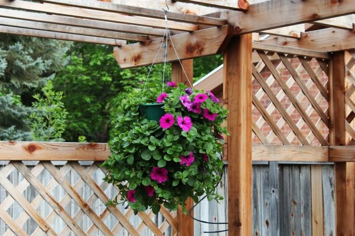 hängepflanzen balkon schöne deko pflanzen