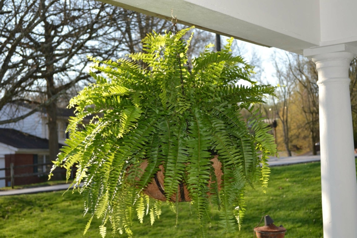 hängepflanzen balkon schöne dekoideen