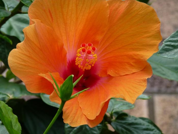 delphinium orange blüte herrlich