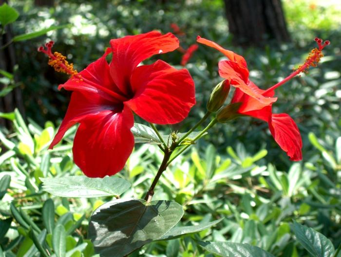 delphinium rote blüten strauch