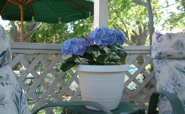 pflege von hortensien im garten pflege von hortensien die. Black Bedroom Furniture Sets. Home Design Ideas