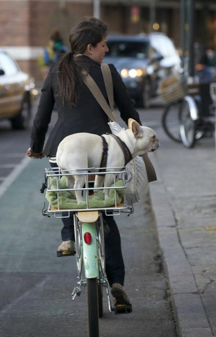 hundekorb fahrrad passendes design aussuchen