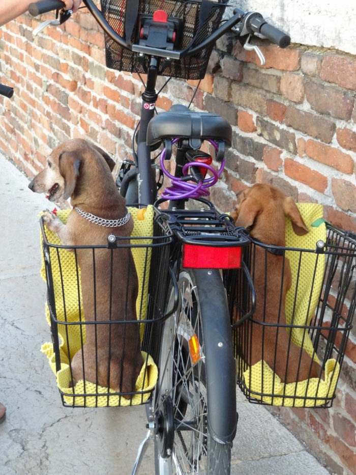 Hundekorb für fahrrad | Hundekorb fürs Fahrrad