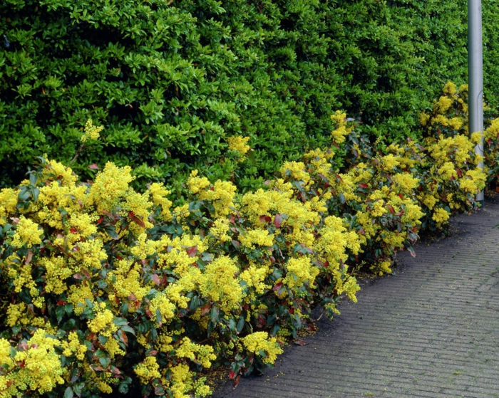 immergrüne pflanzen garten gestalten