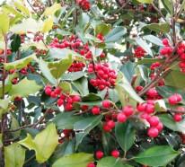 Immergrüne Pflanzen, die Ihrem Garten Charme vermitteln