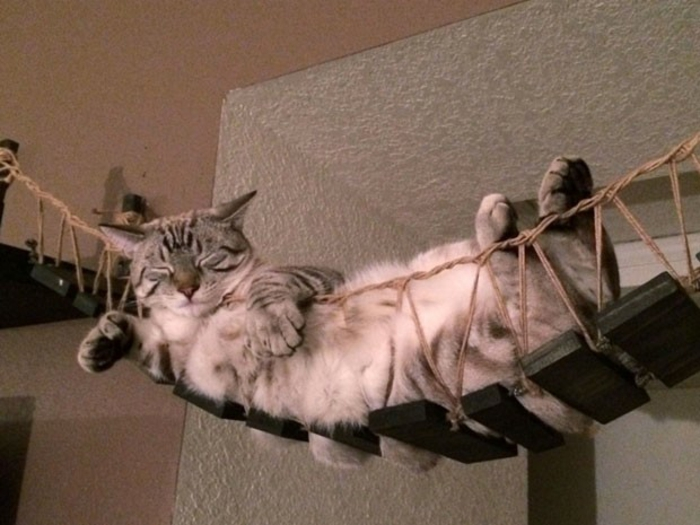 katzenmöbel hängende treppe holz seilen