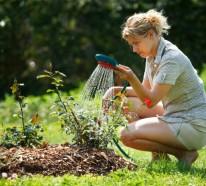 Gartenbewässerung Für Eine Moderne Gartengestaltung Tipps Gartenbewasserung Gartengestaltung