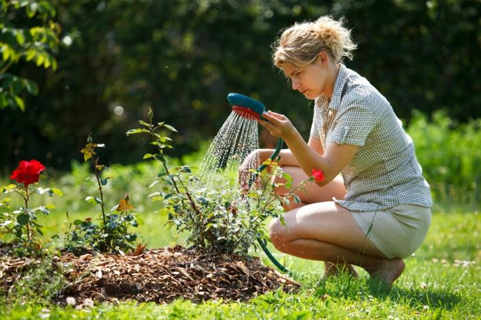moderne gartengestaltung bewässerung tipps blumen