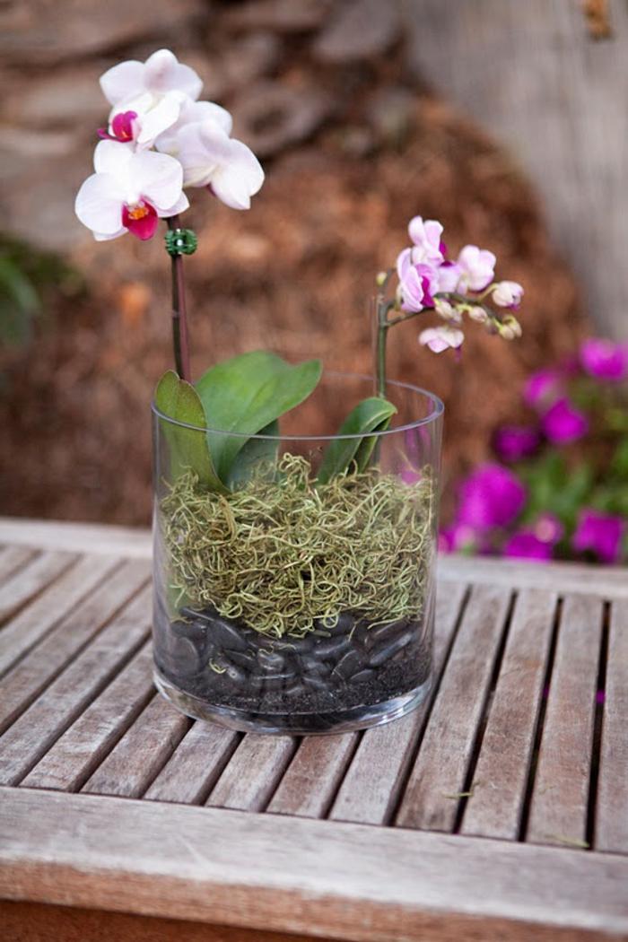 orchidee pflege terrarium schöne dekoideen