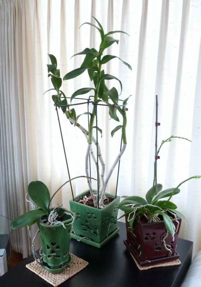 orchidee pflege tipps schöne dekoideen