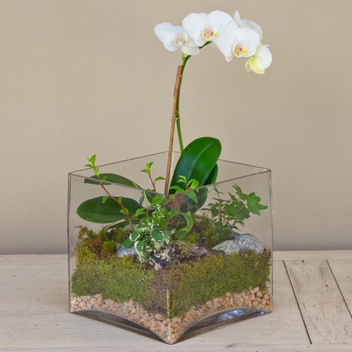 orchidee pflege tipps weiße blüten terrarium