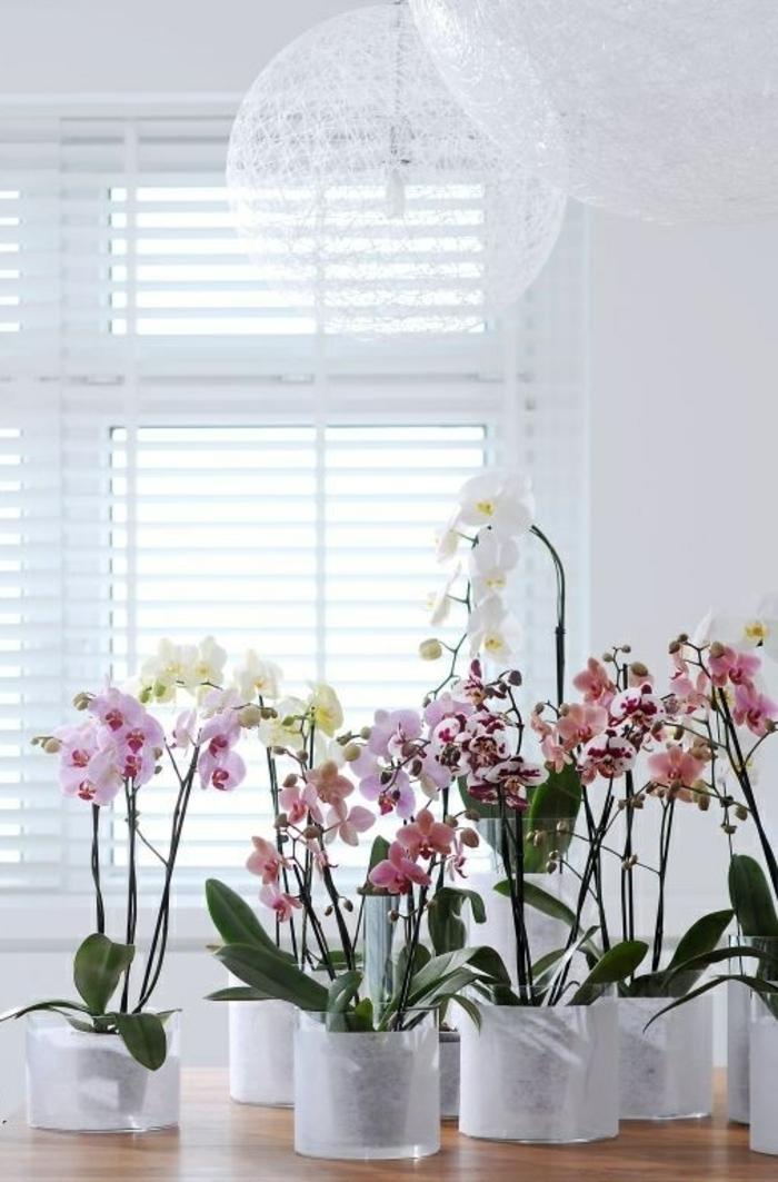 orchidee pflege verschiedene farben innenpflanzen