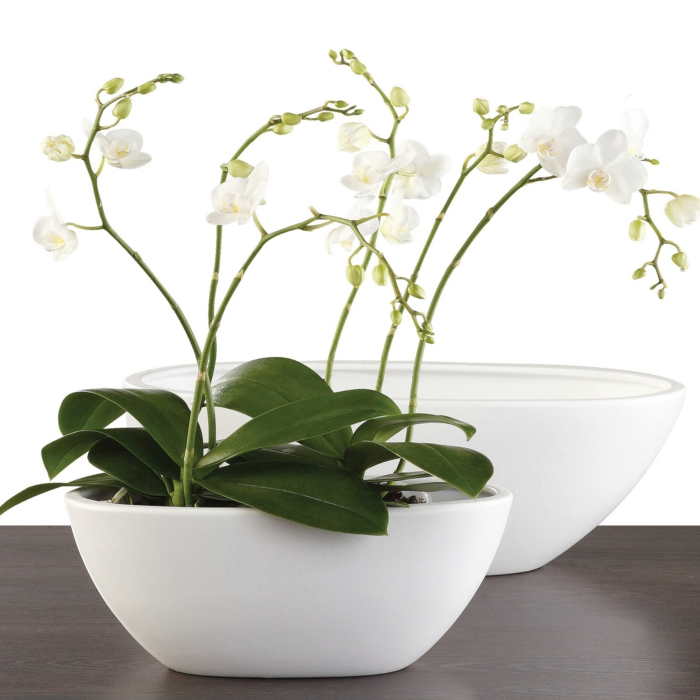 orchidee pflege weißer blumentopf zimmerpflanzen