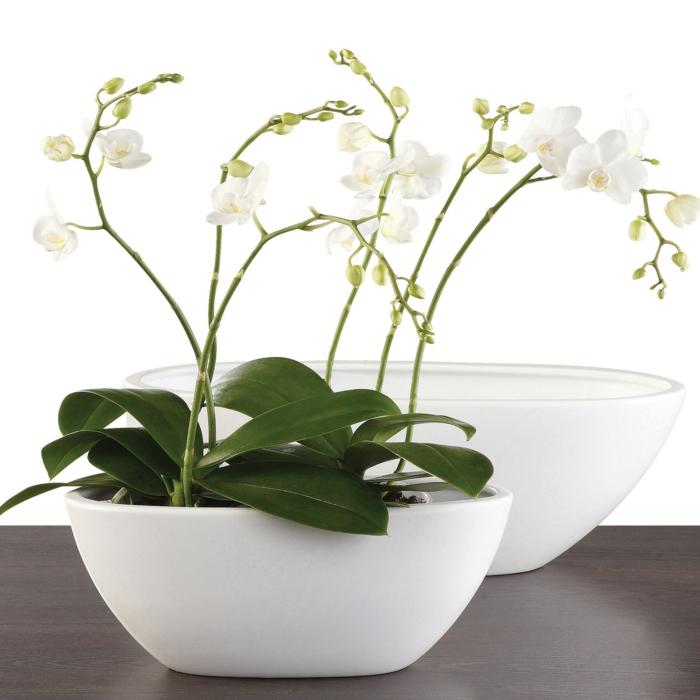 tipps zur orchidee pflege wie berdauert die orchidee l nger. Black Bedroom Furniture Sets. Home Design Ideas