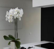 Tipps zur Orchidee Pflege – Wie überdauert die Orchidee länger?