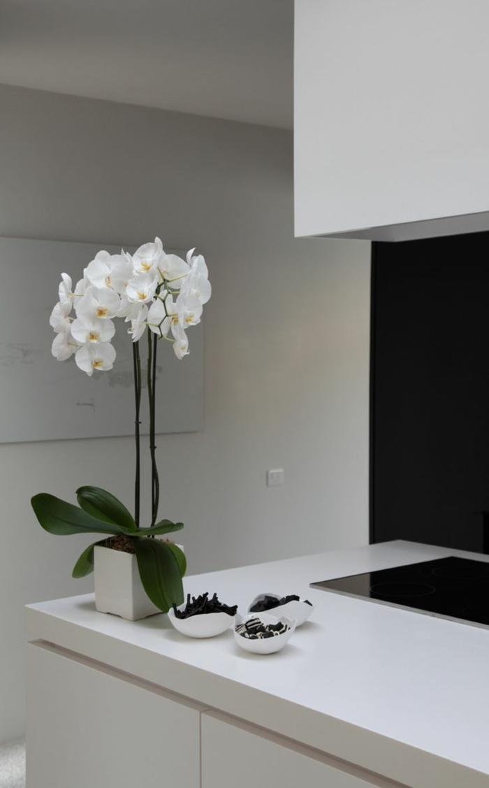 orchideen pflegen Phalaenopsis orchid elegante weißer blumentopf