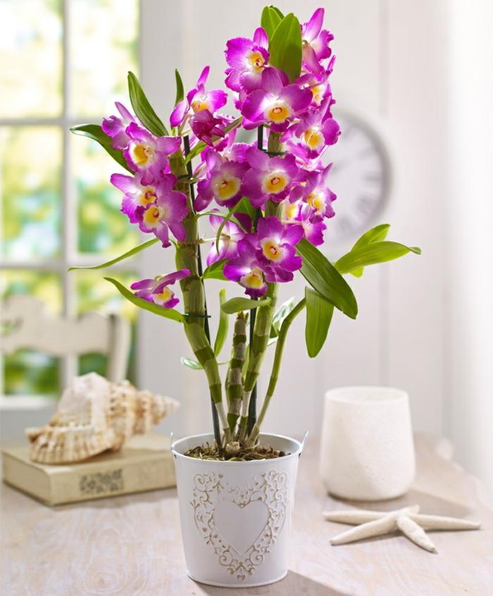 orchideen pflegen lila blüten schöne dekoideen