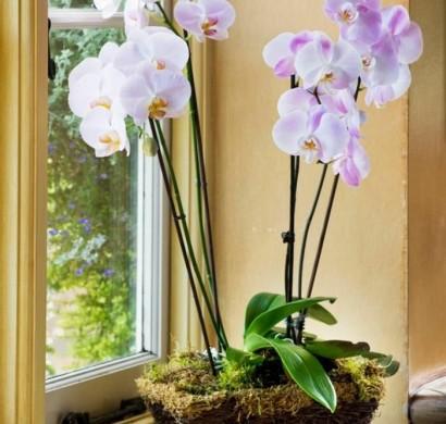 Tipps Zur Orchidee Pflege U2013 Wie überdauert Die Orchidee Länger?
