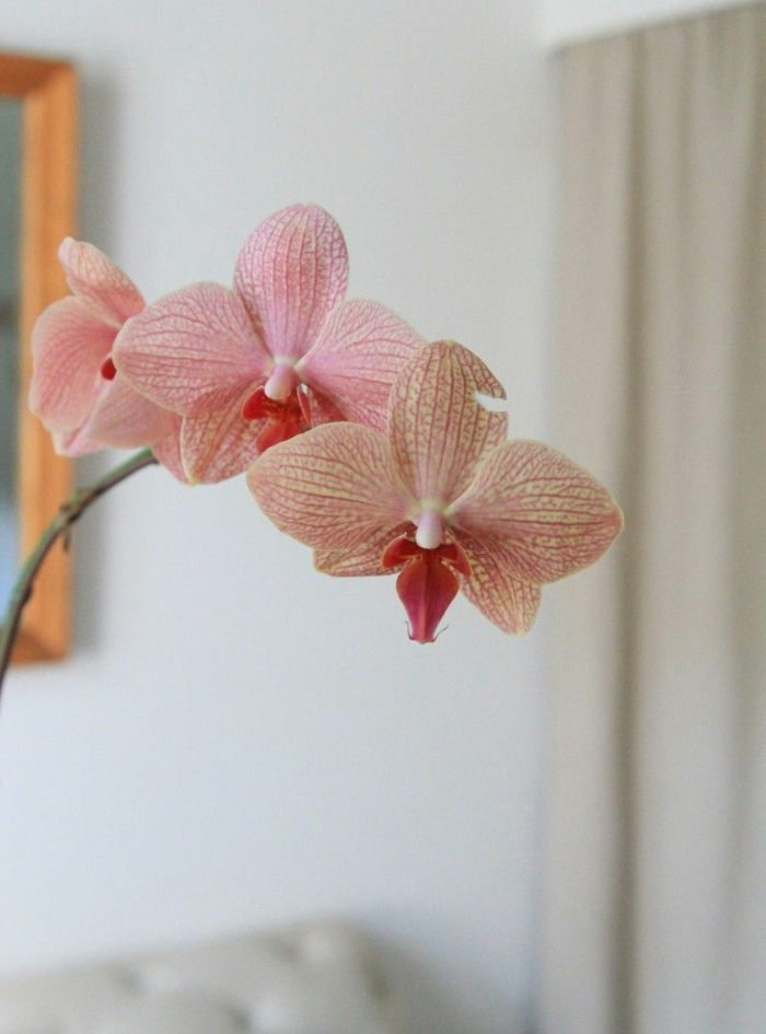 tipps zur orchidee pflege - wie überdauert die orchidee länger?, Haus garten