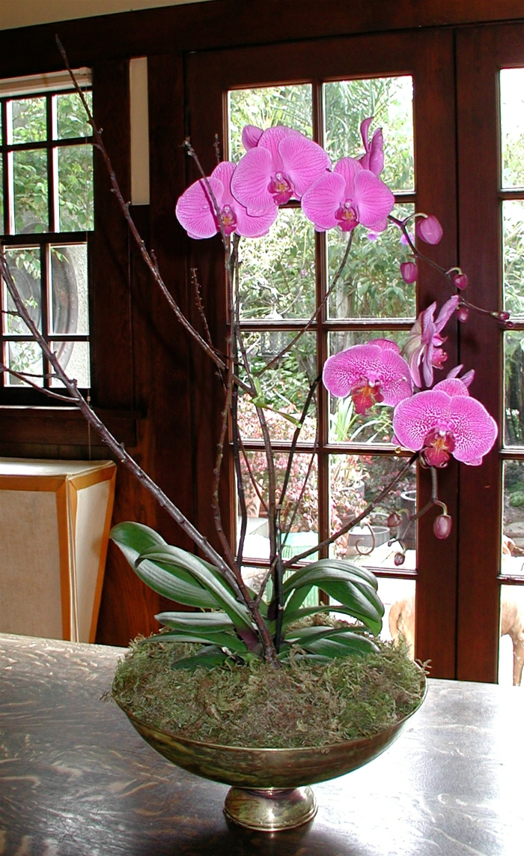 Charmant Orchideen Pflegen Wunderschöne Blüten Innendesign Dekorieren