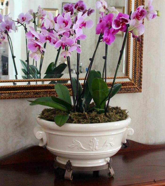 orchideen pflegen zimmerpflanzen schöne dekoideen