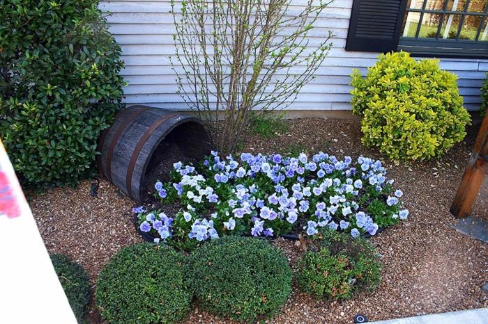 pflanzkübel altes holzfass blaue stiefmütterchen