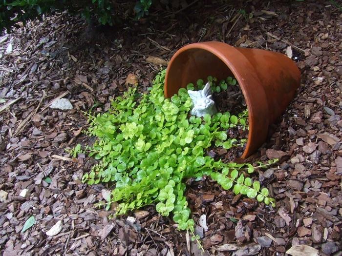 pflanzkübel kleiner blumentopf keramik mulch